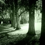 Trees with Noir Effect
