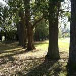 Trees landscape - otriginal, no effects